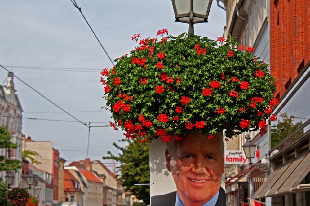 Blumenkopf zur Wahl
