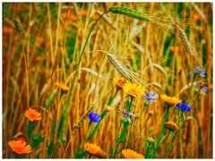Blumen&Korn