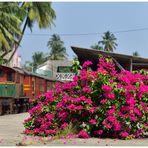 Blumenland Sri Lanka