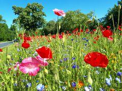 Blumenmeer am Nordsternpark in Gelsenkirchen