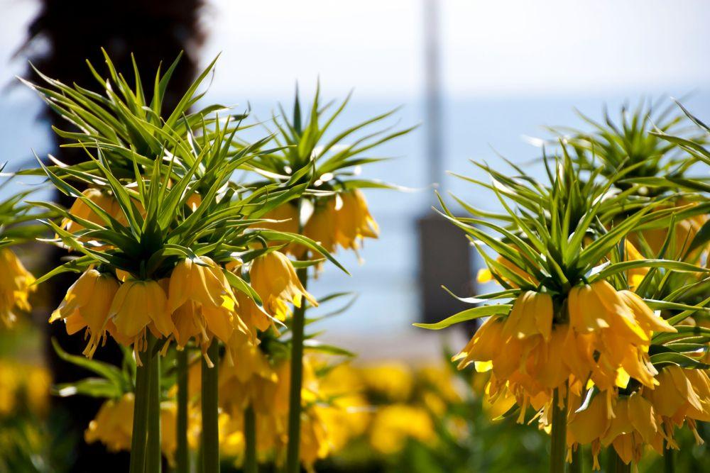 Blumenmeer am See