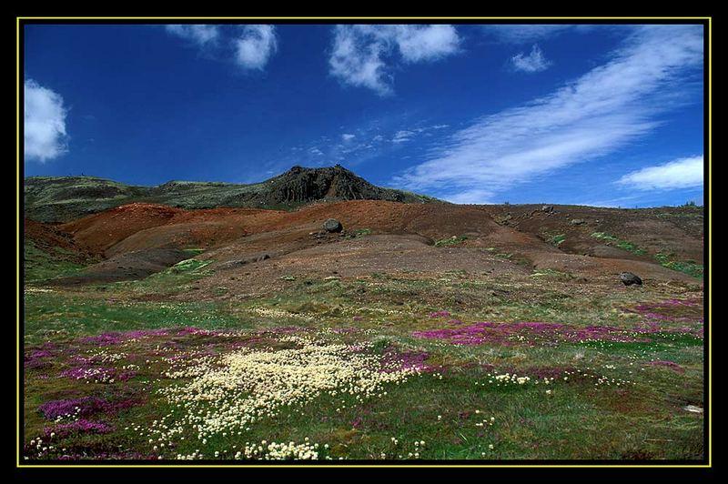 Blumenmeer bei Geysir