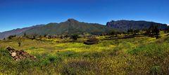 Blumenmeer und Berge