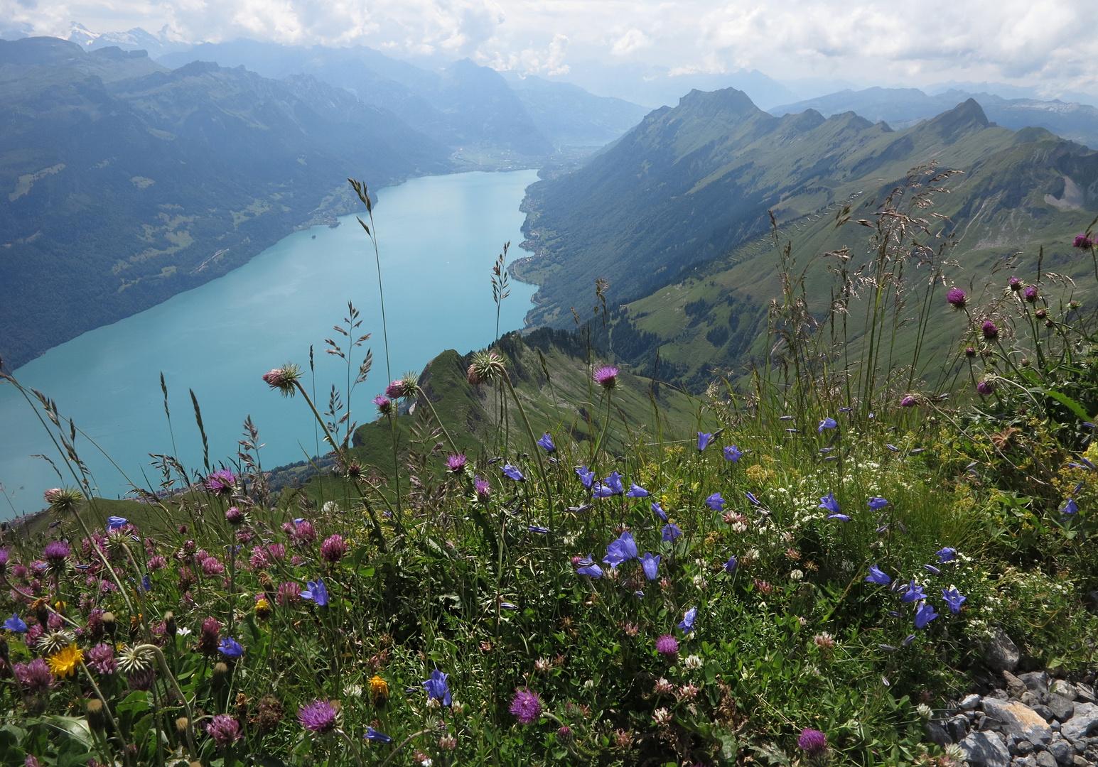Blumenmeer und Brienzersee