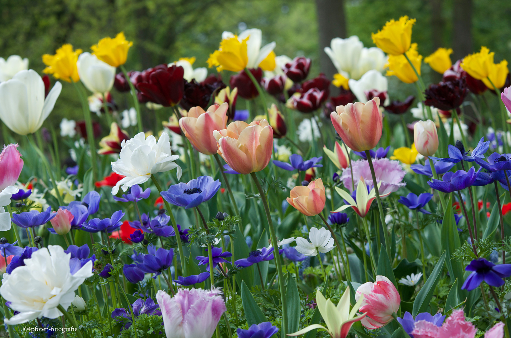 Blumenmeer2