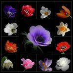 ...Blumenmix...