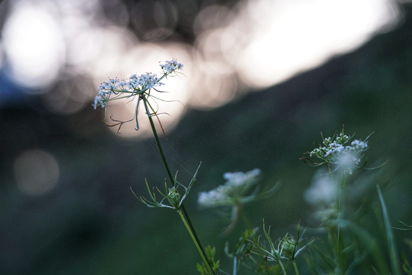 Blumenmorgen