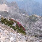 Blumenoase in Steinwüste