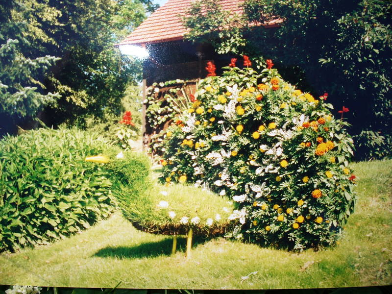 Blumenpfau im Rasen