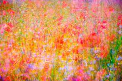 Blumenpotpourri ...