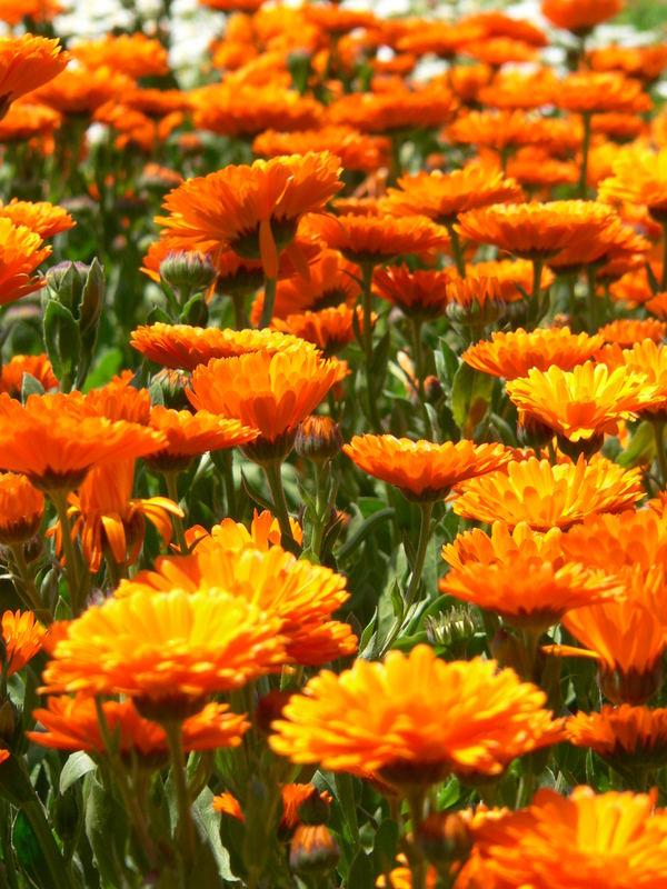 Blumenpracht...