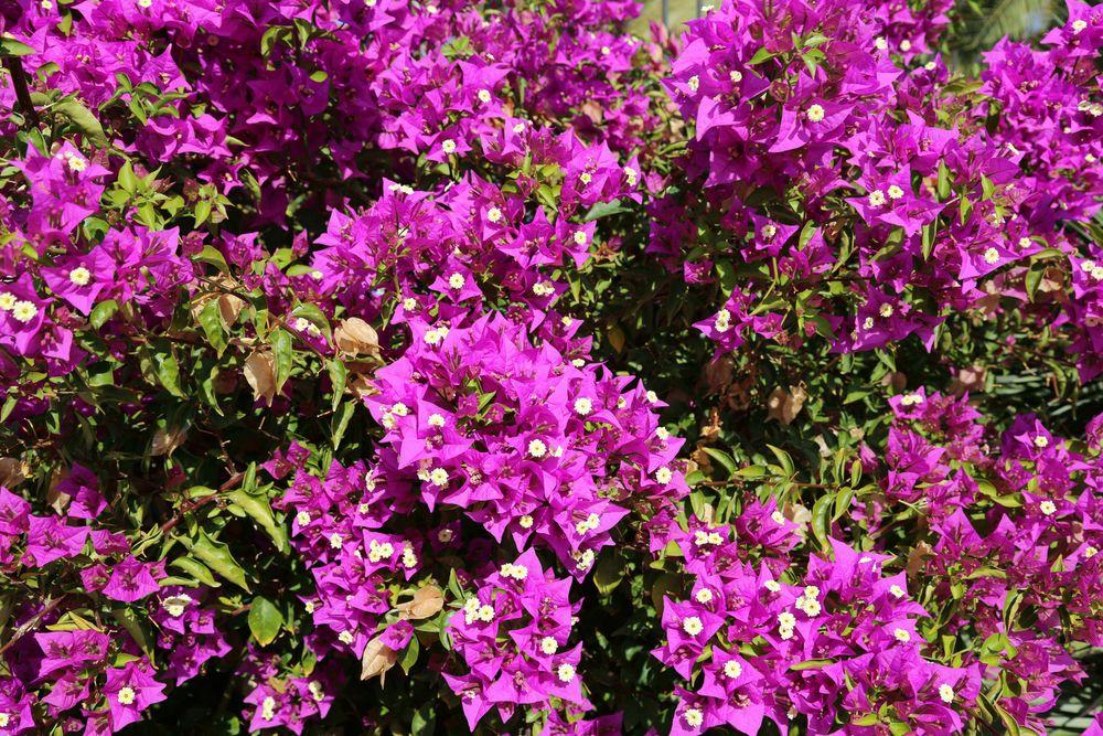 Blumenpracht im kanarischen Winter (I)