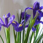 Blumenpracht in der Vase