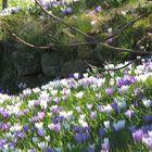 Blumenpracht in Keitum