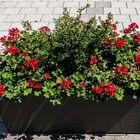 Blumenrabatte
