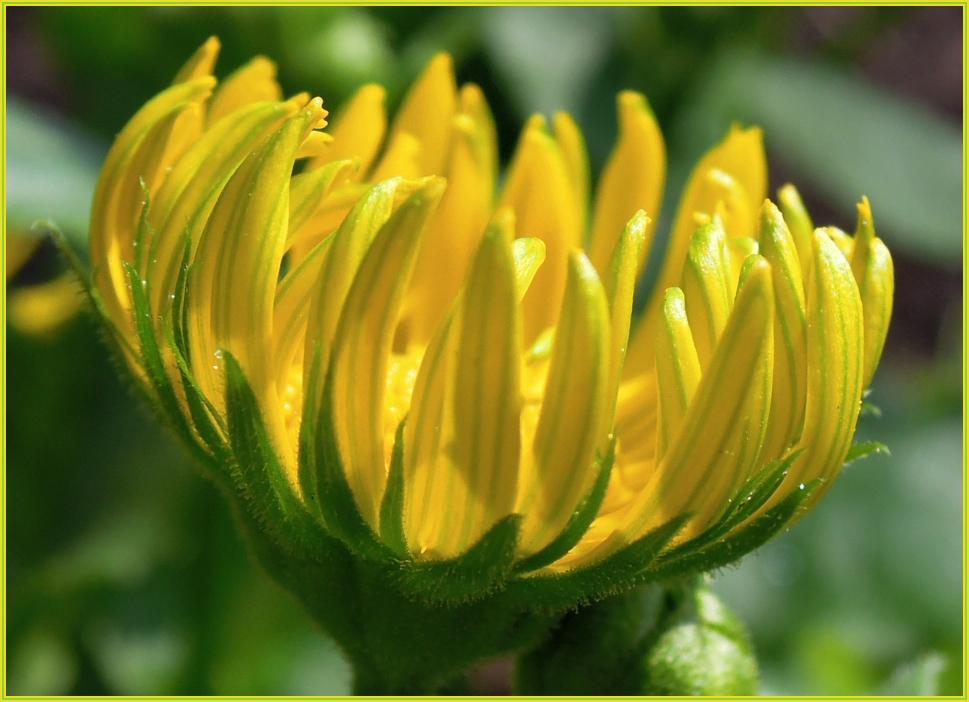 Blumenrätsel