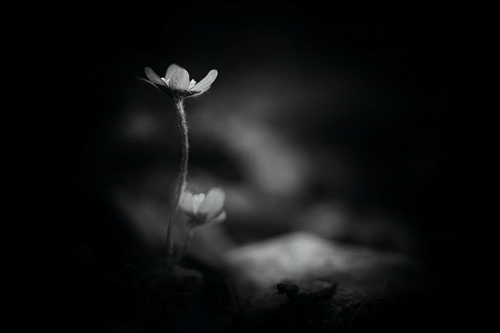 Blumenreich