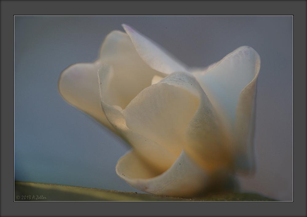 Blumenschleier