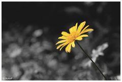 Blumenschönheiten im Stadtpark von Rheine