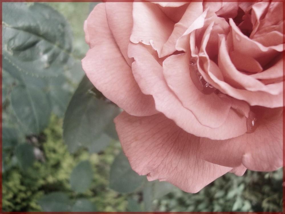 Blumensprache.