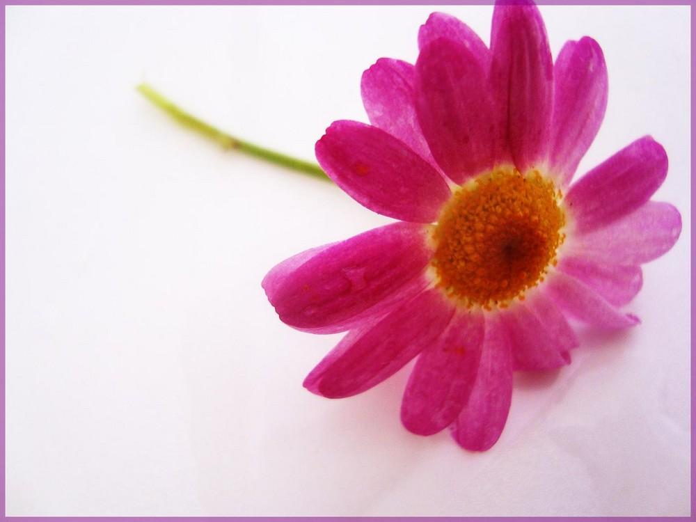 Blumensprache. II