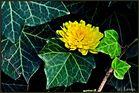 Blumensprache. IV