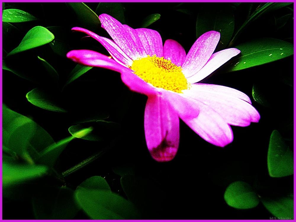 Blumensprache. VIII