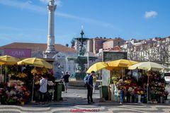 Blumenstände am Rossio Lisboa