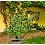 Blumenstillleben mit Sonnenblumen