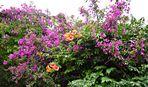 Blumenstrauch mit mediterranem Flair