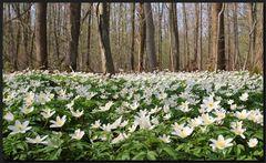 ...BlumenTeppich...