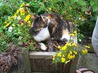 Blumentopf Katze