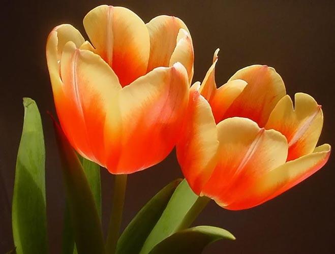 Blumenvasen-Frühling