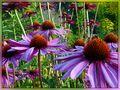 Blumenwald von Von der Dinkelheide