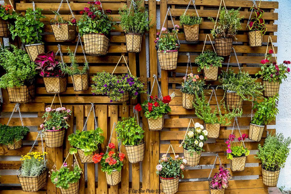 Blumenwand Restaurant Paranga - Mageirotechneio