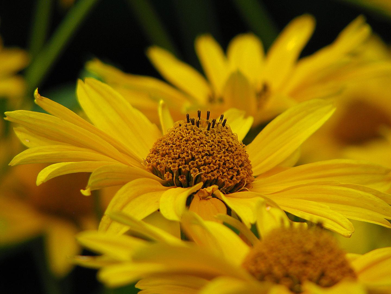 Blumenwelt..