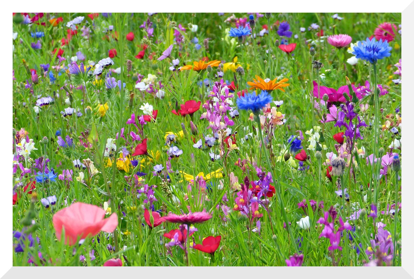 Blumenwiese Foto Bild Jahreszeiten Sommer Natur Bilder Auf
