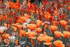 Blumenwiese........