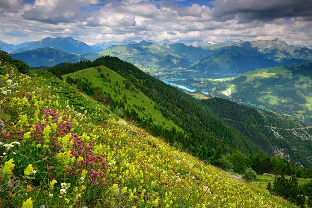 Blumenwiese am Objou V1