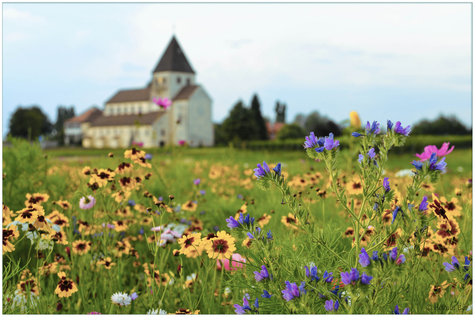 Blumenwiese Auf Der Reichenau Foto Bild Pflanzen Pilze