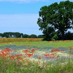 Blumenwiese, Flower meadow, Prado de flores