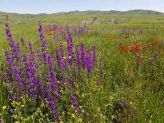 Blumenwiese im Kleinen Kaukasus