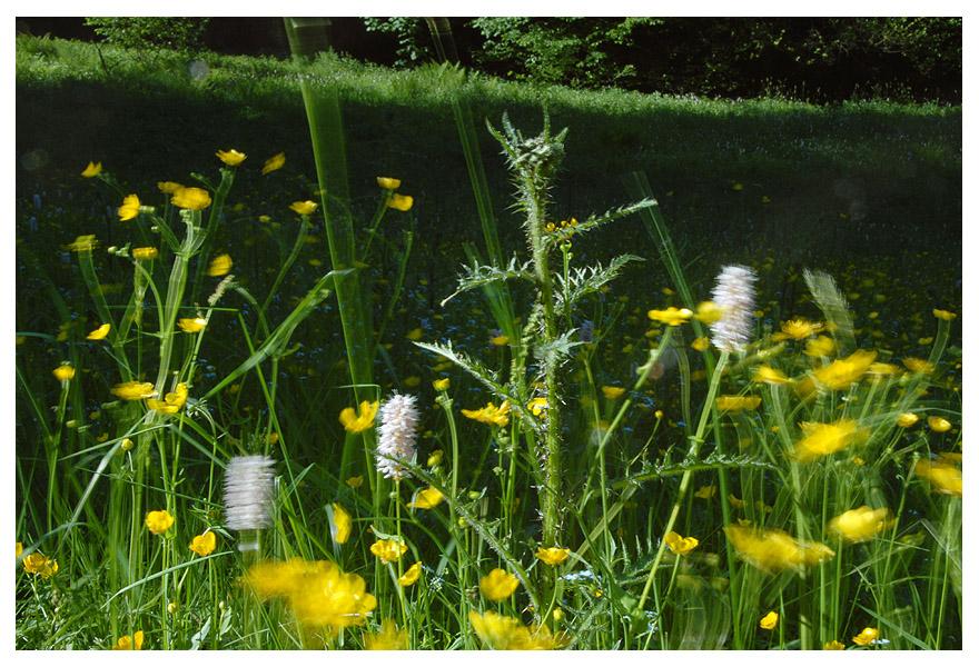 Blumenwiese im Oberbergischen