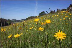 ~ Blumenwiese im Voralpenland ~