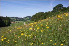 ~ Blumenwiese im Voralpenland II ~