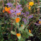 Blumenwiese in Evian 1