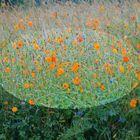 Blumenwiese in Evian 2