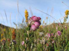 Blumenwiese in Norwegen
