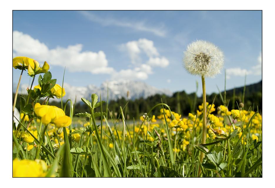 Blumenwiese mit Berg im Hintergrund