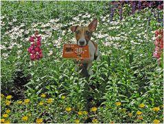 Blumenwiese mit Hund - mittig :-)